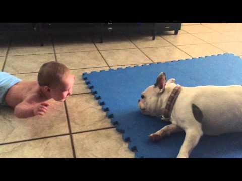 Юмор: Французский бульдог развлекает малыша