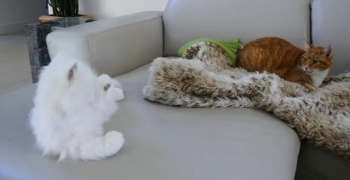 Реакция кошек на кошку-робота