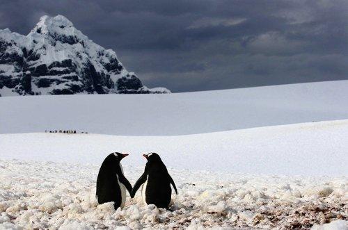 Милые пингвинчики (19 фото)