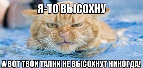 Мемы с животными, которые чем-то недовольны (12 фото)