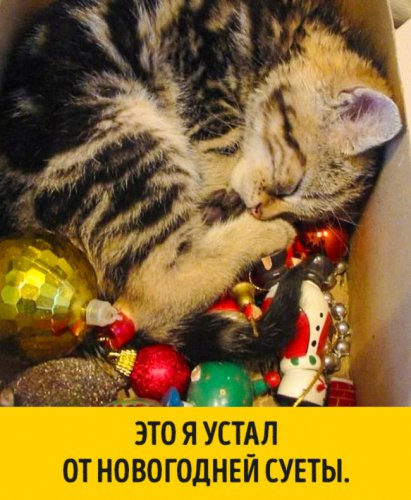 Животные,которые ждали Нового года (15 фото)