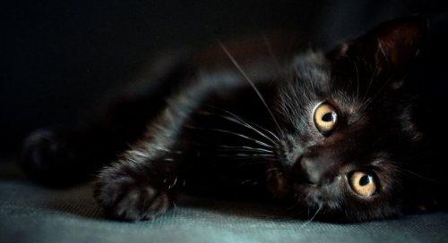 Кот Мазай