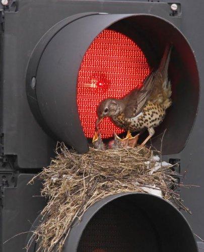 Красивые птицы с птенцами (25 фото)