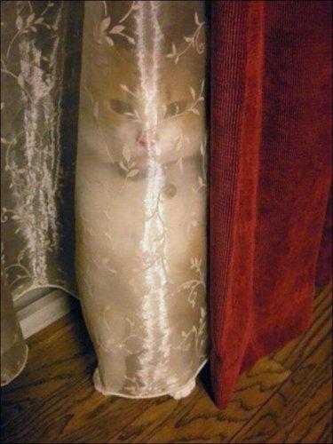 Кошачьи маскировки (25 фото)