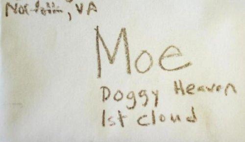Трёхлетний мальчик написал письмо своей умершей собаке и... получил ответ