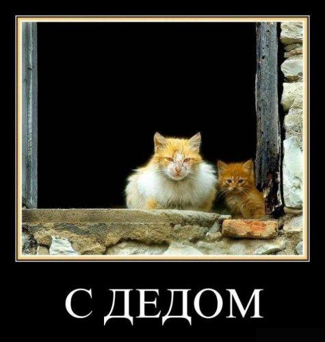 Демотиваторы для хорошего настроения (25 фото)