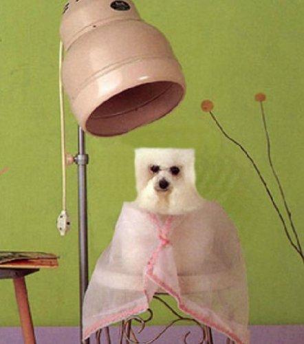 Необычные стрижки тайваньских собак (10 фото)