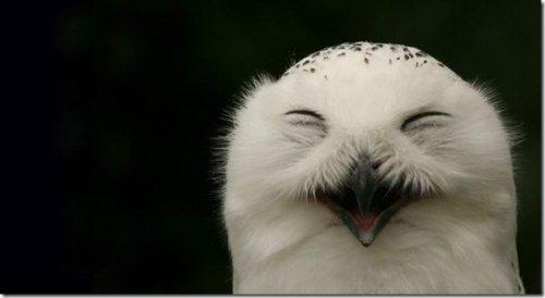 Юмор: Смешные и милые совы