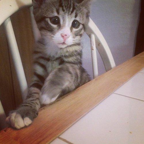 Котёнок Бам с милыми и беспокойными глазками (6 фото)