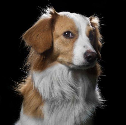 Портреты кошек и собак в фотопроекте Роберта Баху (11 фото)
