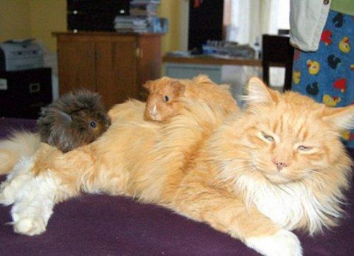 Самые уютные кошки (10 фото)