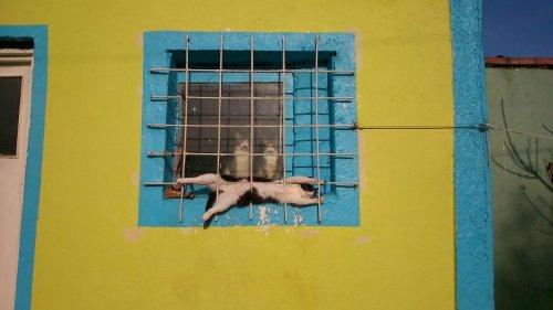 Кот в нирване (3 фото)