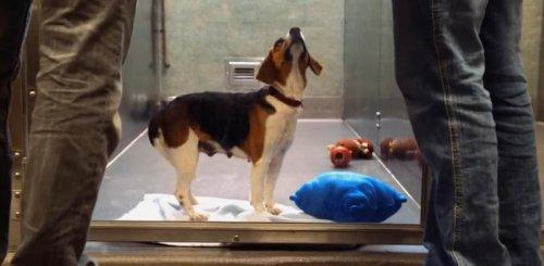 Подарите бездомным животным шанс на новую жизнь!