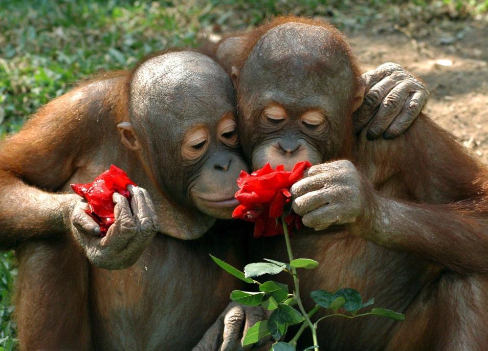 веселые картинки про любовь