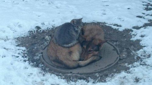 Взаимопомощь в животном мире (2 фото)