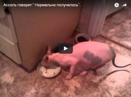 Юмор: Хозяин спросил у кошки, понравилось ли ей еда