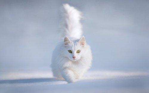 Это интересно:Кошки, исцеляющие прогрессивнее медицины