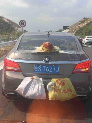 Как транспортируют живность в Китае (9 фото)
