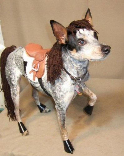Забавные собаки, похожие на лошадок (10 фото)