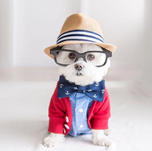Собака-хипстер по кличке Тобиас (20 фото)