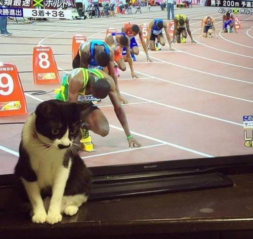 Смешные стоп-кадры с кошками (10 фото)