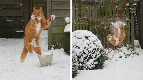 Котики, которые поднимут Ваше настроение (15 фото)
