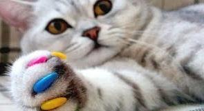 10 лайфхаков для владельцев кошек