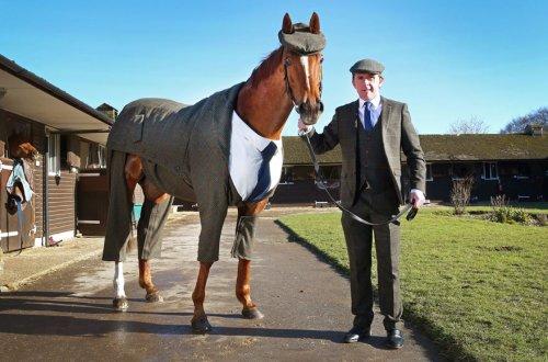 Конь в костюме-тройке (4 фото + видео)