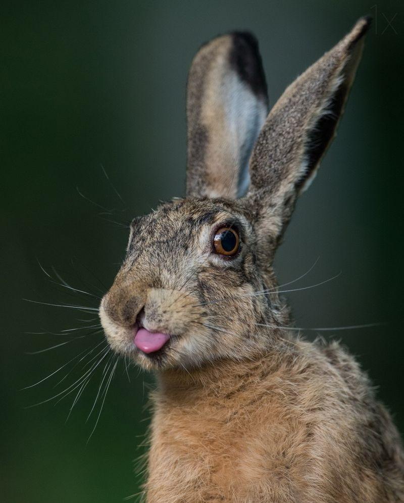 Картинка зайцев смешно