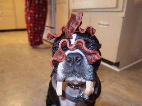 Самые послушные и терпеливые домашние животные (22 фото)