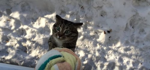 Это самый необычный вход кота домой!