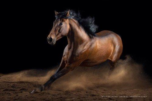 Как бросить скучную офисную работу и начать фотографировать лошадей (10 фото)