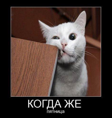Милые и очаровательные котейки (25 фото)