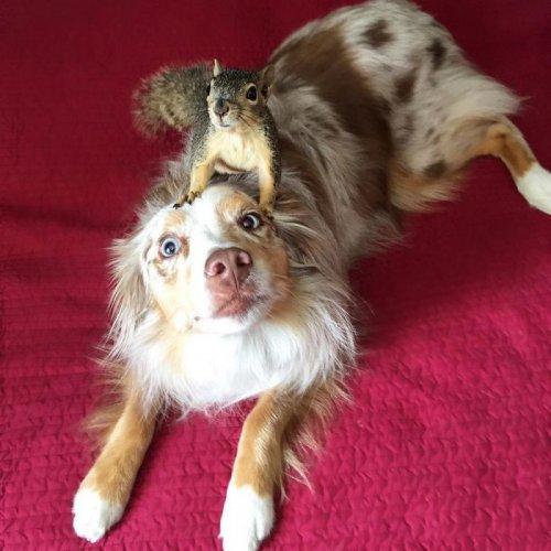 Собака и белка — лучшие друзья (10 фото)