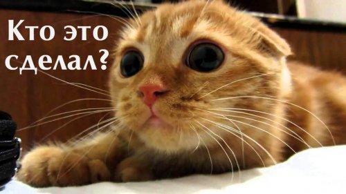 Юмор: Топ вопросов, которые каждый из нас задавал своему любимому коту (11 фото)