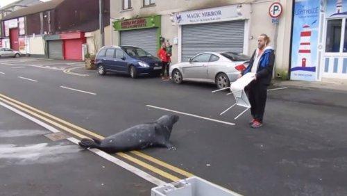Тюлень Сэмми повадился ходить в рыбный ресторан (6 фото)