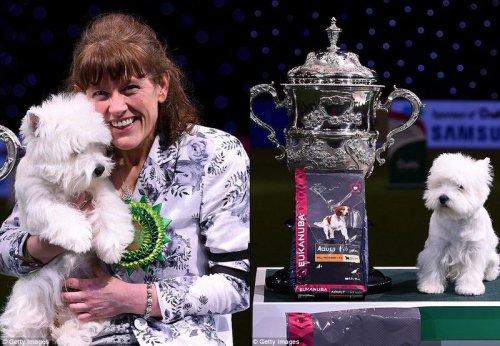 В Великобритании выбрали лучшую собаку мира (4 фото)