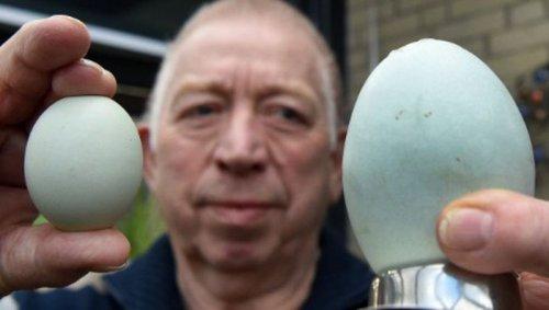 В Германии курица снесла самое большое яйцо в мире (2 фото)