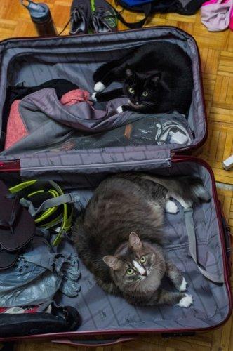 Домашние питомцы, которые тоже хотят поехать в отпуск (15 фото)