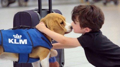 Собака, которая возвращает забытые в самолёте вещи