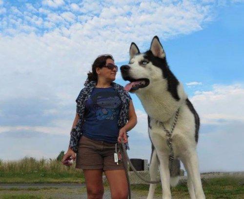 Юмор: 8 вовремя сделанных снимков, на которых собаки выглядят гигантами