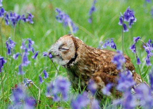15 самых очаровательных животных, наслаждающихся ароматом цветов (15 фото)