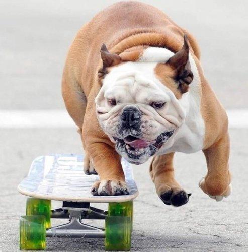 Юмор:Ну очень самостоятельные собаки! (11 фото)