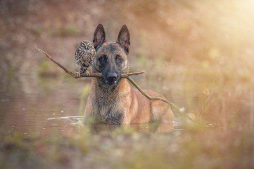 Самая странная пара лучших друзей: пёс и сова! (8 фото)