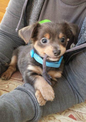 Очаровательные щенки (35 фото)