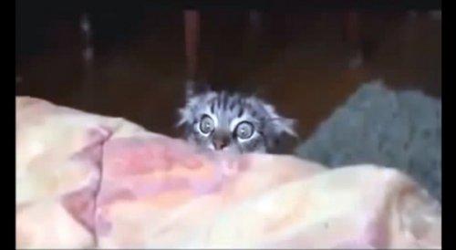 Юмор: Ох уж эти коты!