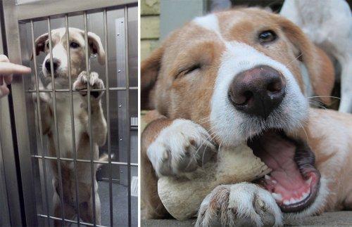 Как изменились животные, взятые из приюта (14 фото)