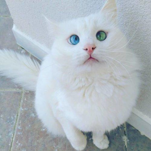 Наши любимые котейки,которых мы обожаем не за внешность (15 фото)