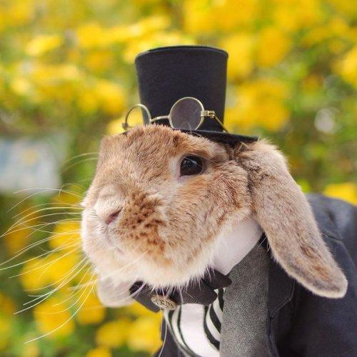 Самый стильный кролик (16 фото)