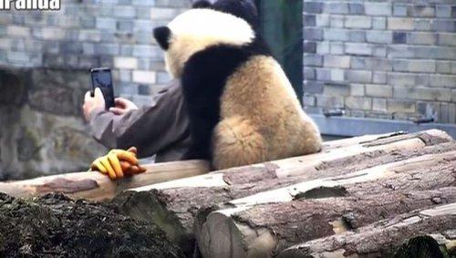 Панда, делающая селфи, покорила интернет-пользователей